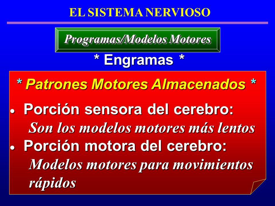 Programas/Modelos Motores * Patrones Motores Almacenados *