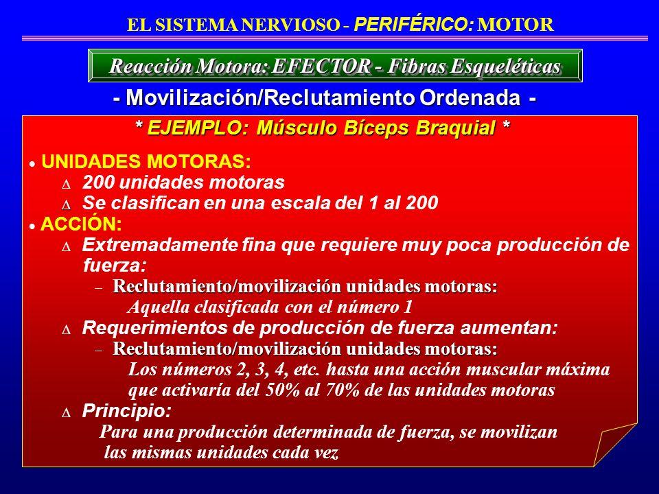 - Movilización/Reclutamiento Ordenada -