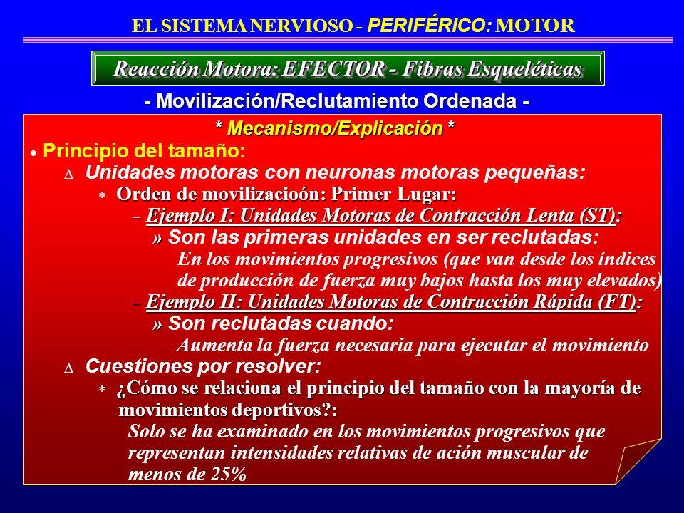 Reacción Motora: EFECTOR - Fibras Esqueléticas
