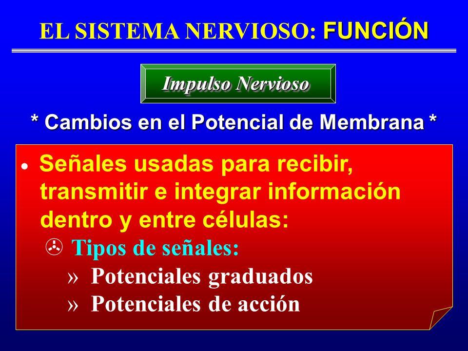 EL SISTEMA NERVIOSO: FUNCIÓN * Cambios en el Potencial de Membrana *