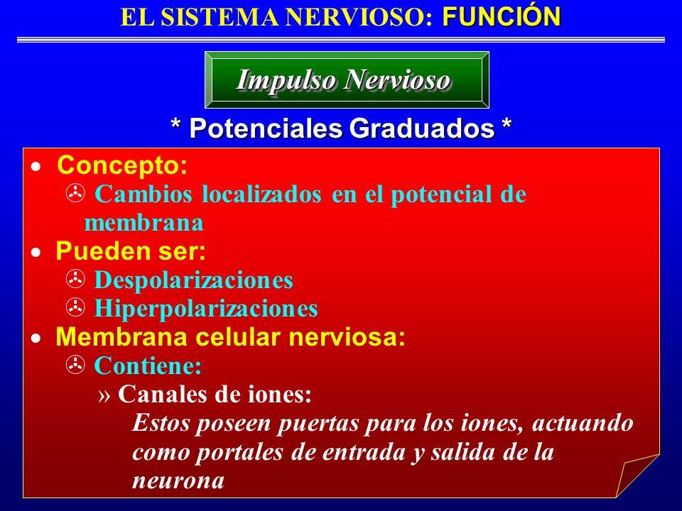 EL SISTEMA NERVIOSO: FUNCIÓN * Potenciales Graduados *