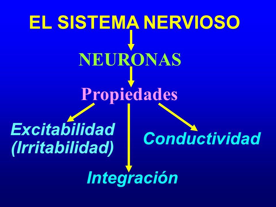 EL SISTEMA NERVIOSO NEURONAS Excitabilidad (Irritabilidad)