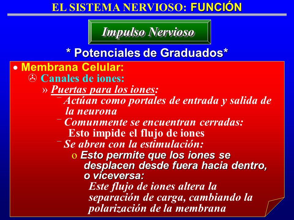 EL SISTEMA NERVIOSO: FUNCIÓN * Potenciales de Graduados*