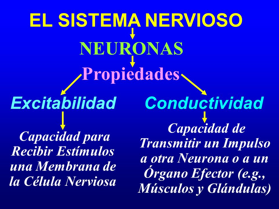 Capacidad para Recibir Estímulos una Membrana de la Célula Nerviosa