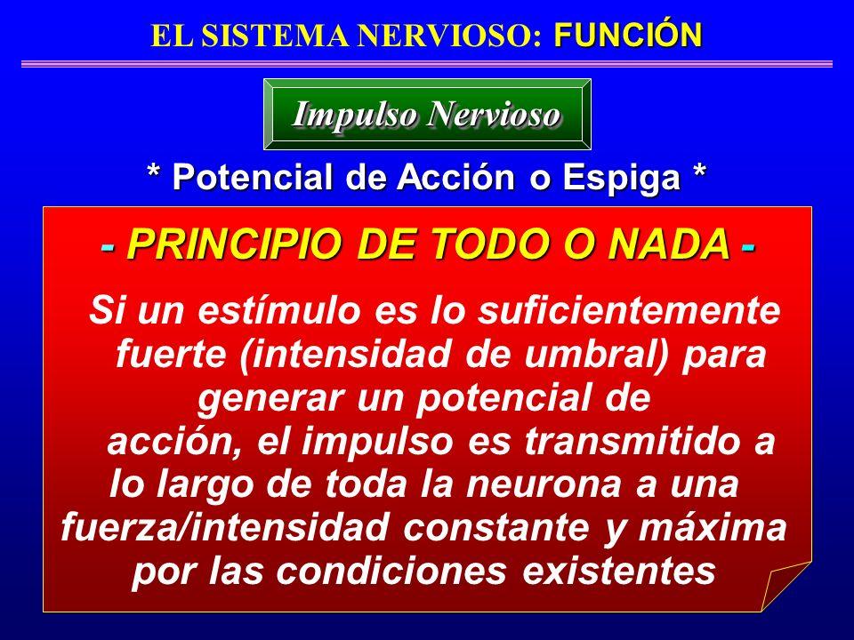 - PRINCIPIO DE TODO O NADA -