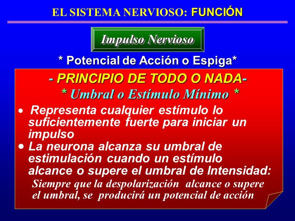 - PRINCIPIO DE TODO O NADA- * Umbral o Estímulo Mínimo *