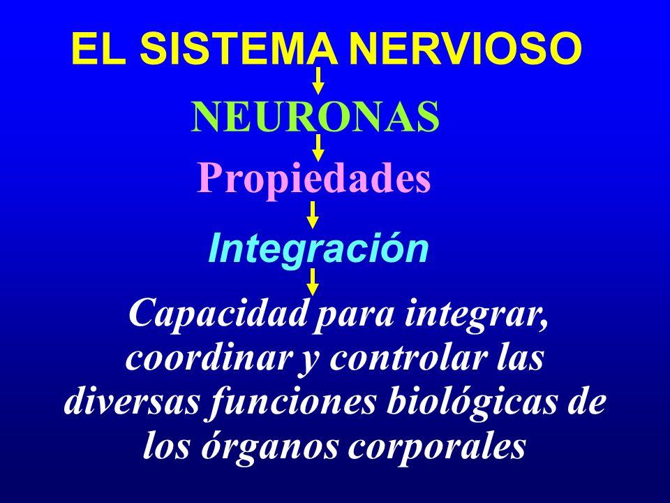 EL SISTEMA NERVIOSO NEURONAS Integración Propiedades