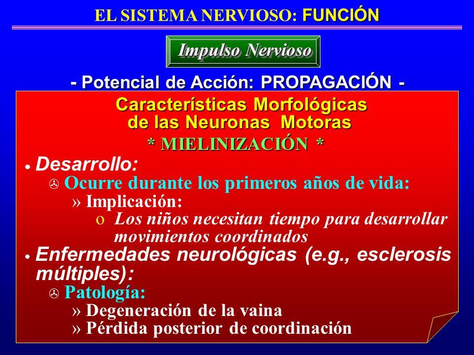 múltiples): - Potencial de Acción: PROPAGACIÓN - Impulso Nervioso
