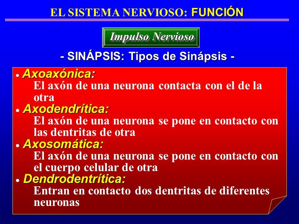 EL SISTEMA NERVIOSO: FUNCIÓN - SINÁPSIS: Tipos de Sinápsis -