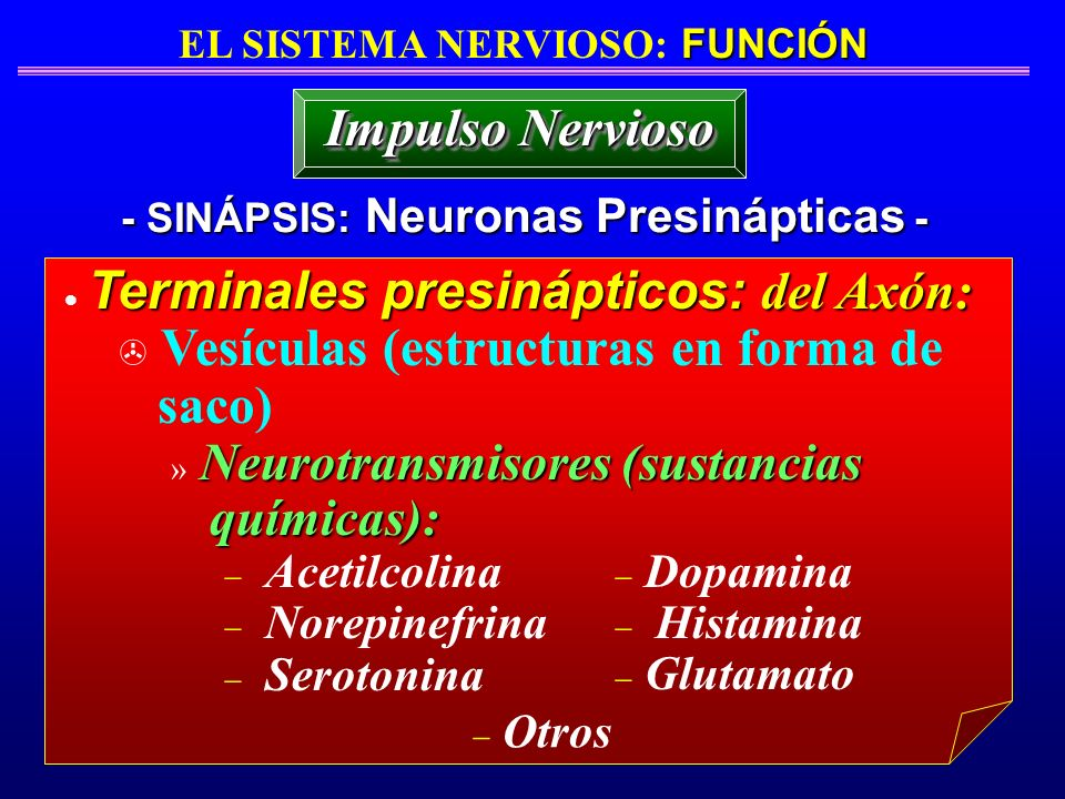 EL SISTEMA NERVIOSO: FUNCIÓN - SINÁPSIS: Neuronas Presinápticas -