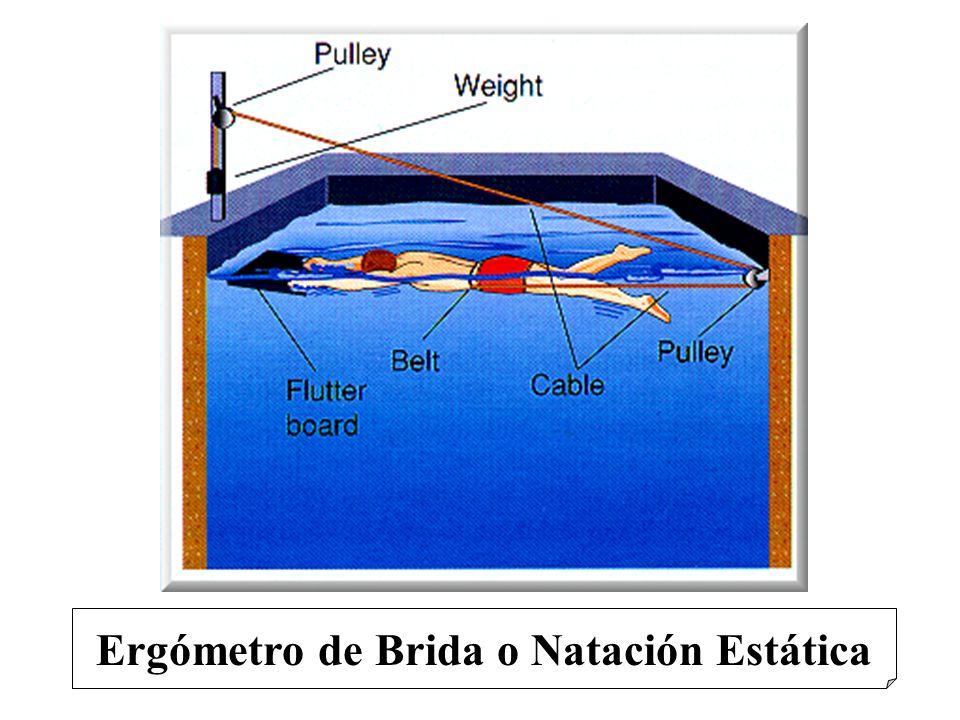 Ergómetro de Brida o Natación Estática