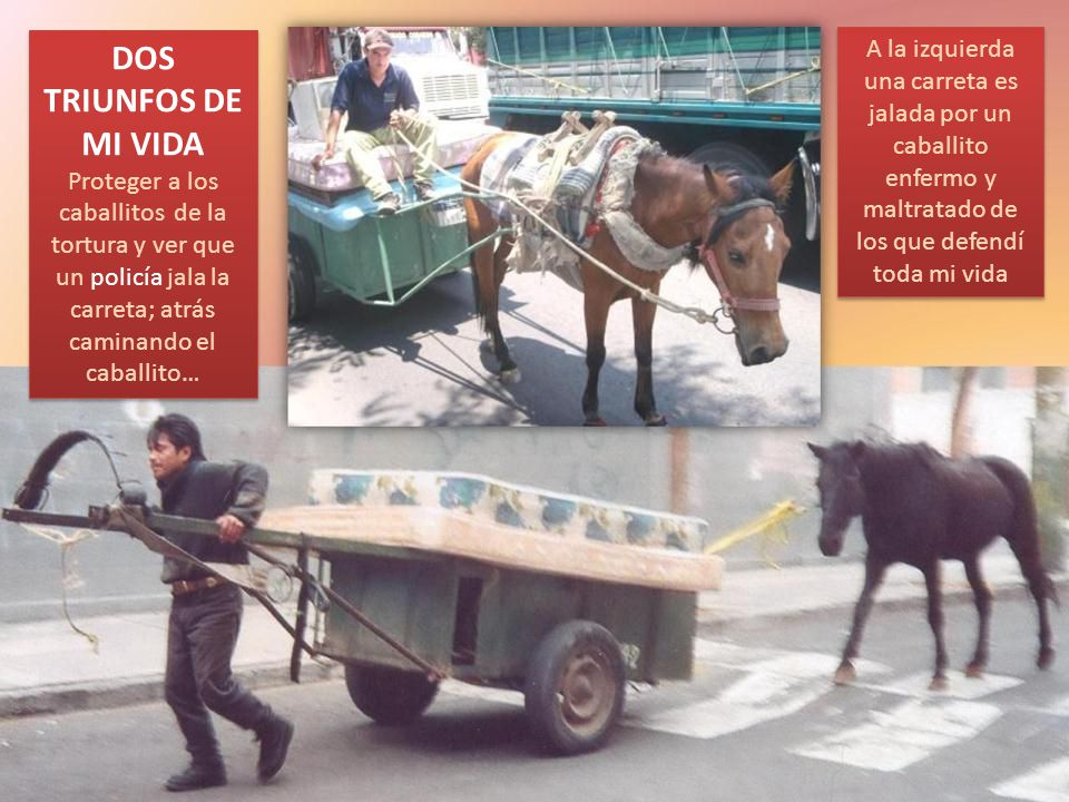DOS TRIUNFOS DE MI VIDA Proteger a los caballitos de la tortura y ver que un policía jala la carreta; atrás caminando el caballito…