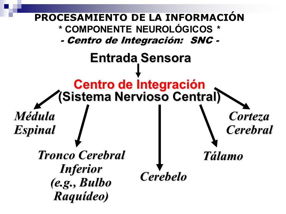 (Sistema Nervioso Central) Tronco Cerebral Inferior