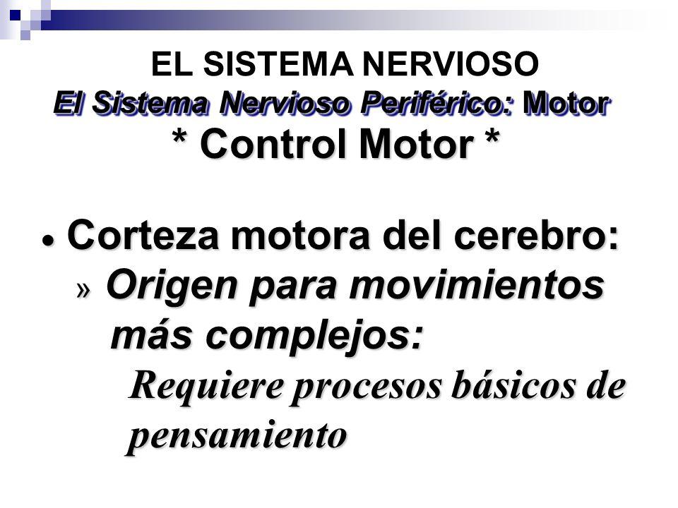 El Sistema Nervioso Periférico: Motor