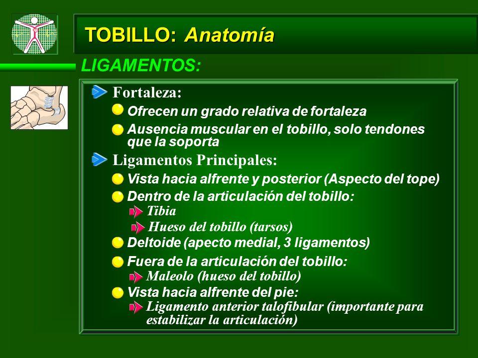 TOBILLO: Anatomía LIGAMENTOS: Fortaleza: Ligamentos Principales: Tibia