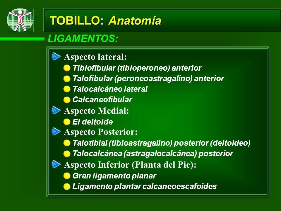 TOBILLO: Anatomía LIGAMENTOS: Aspecto lateral: Aspecto Medial: