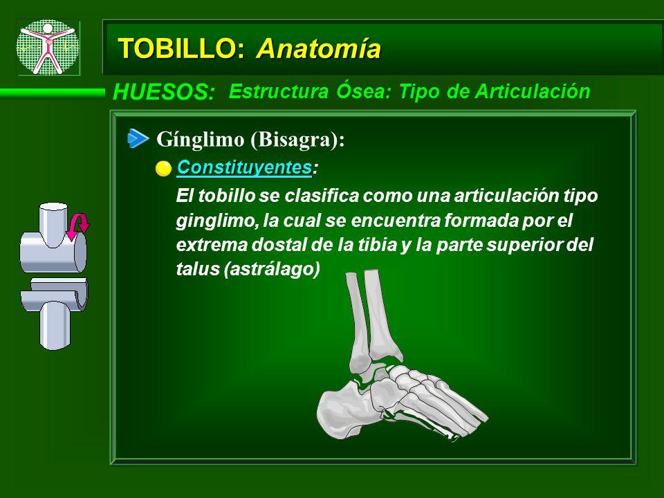 TOBILLO: Anatomía HUESOS: Gínglimo (Bisagra):