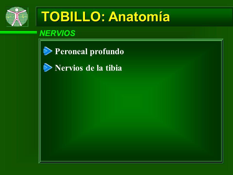 TOBILLO: Anatomía Peroneal profundo Nervios de la tibia NERVIOS