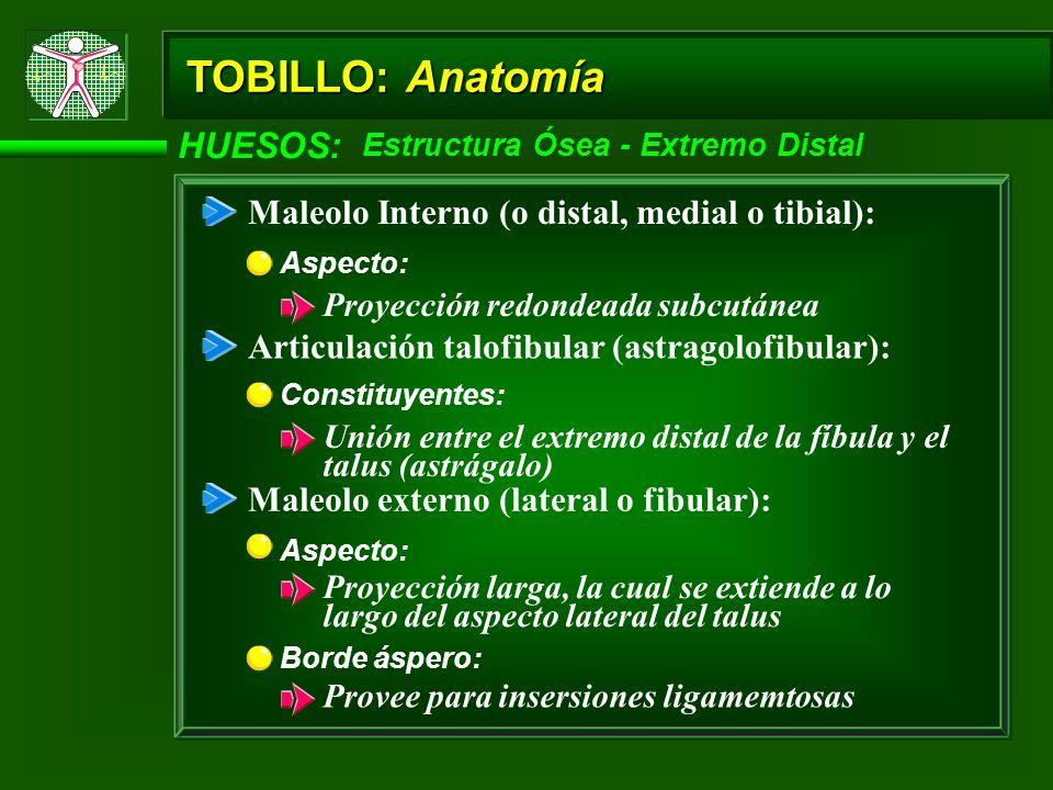 TOBILLO: Anatomía HUESOS: Maleolo Interno (o distal, medial o tibial):