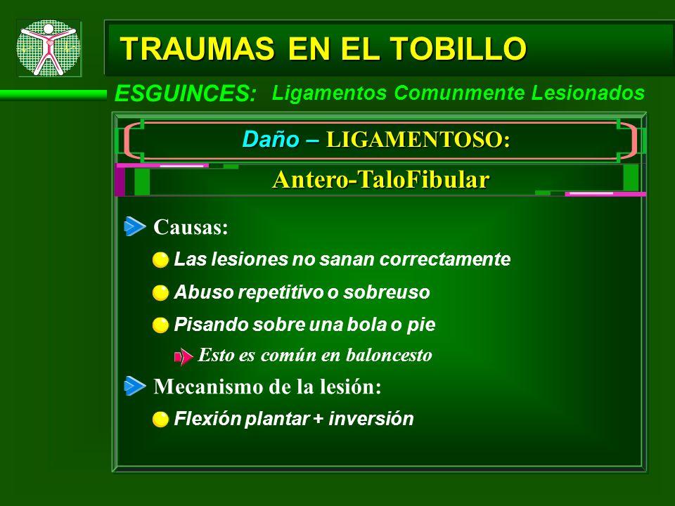 TRAUMAS EN EL TOBILLO Antero-TaloFibular ESGUINCES: