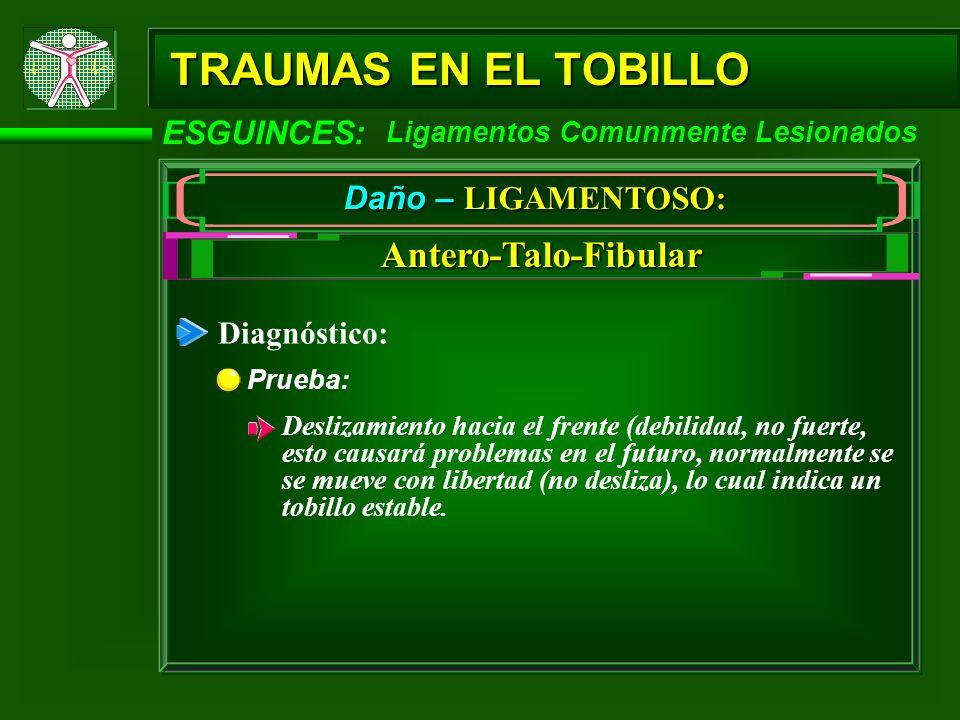 TRAUMAS EN EL TOBILLO Antero-Talo-Fibular ESGUINCES: