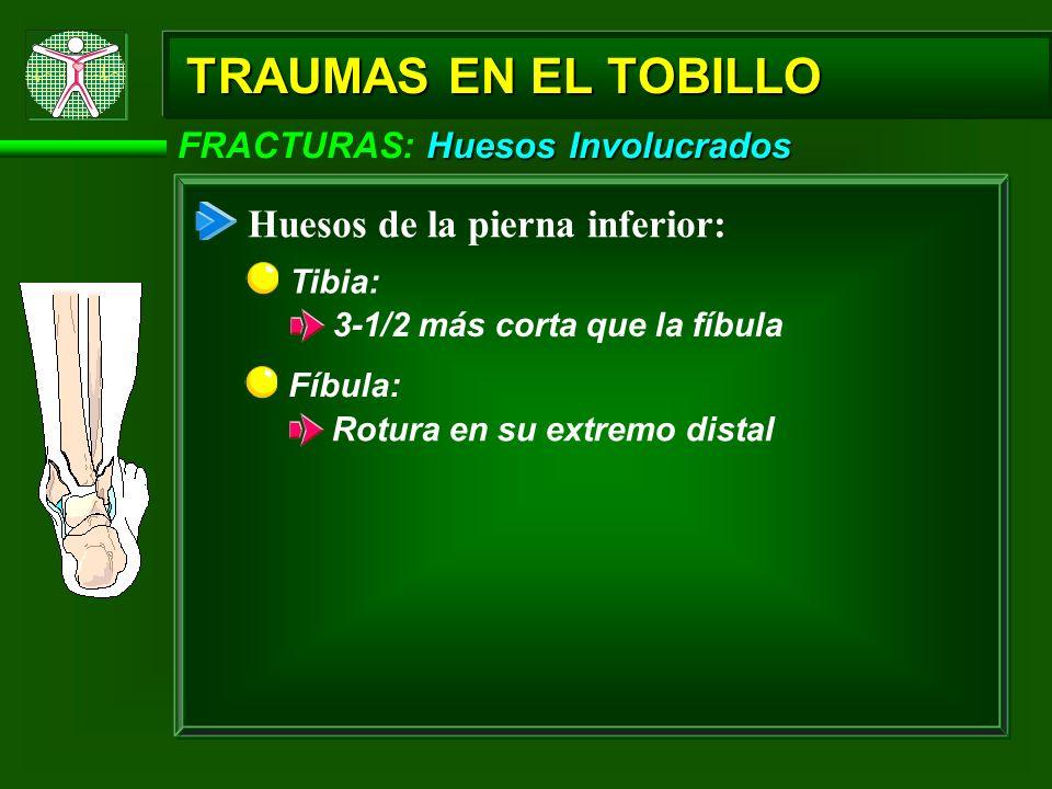 TRAUMAS EN EL TOBILLO Huesos de la pierna inferior: