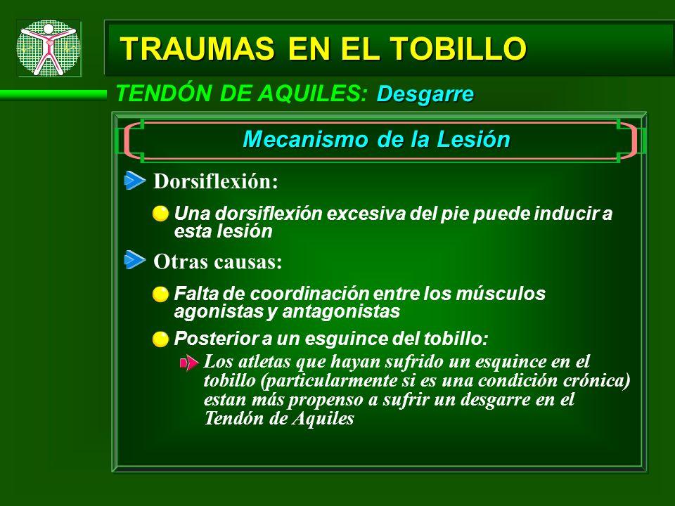 TRAUMAS EN EL TOBILLO TENDÓN DE AQUILES: Desgarre