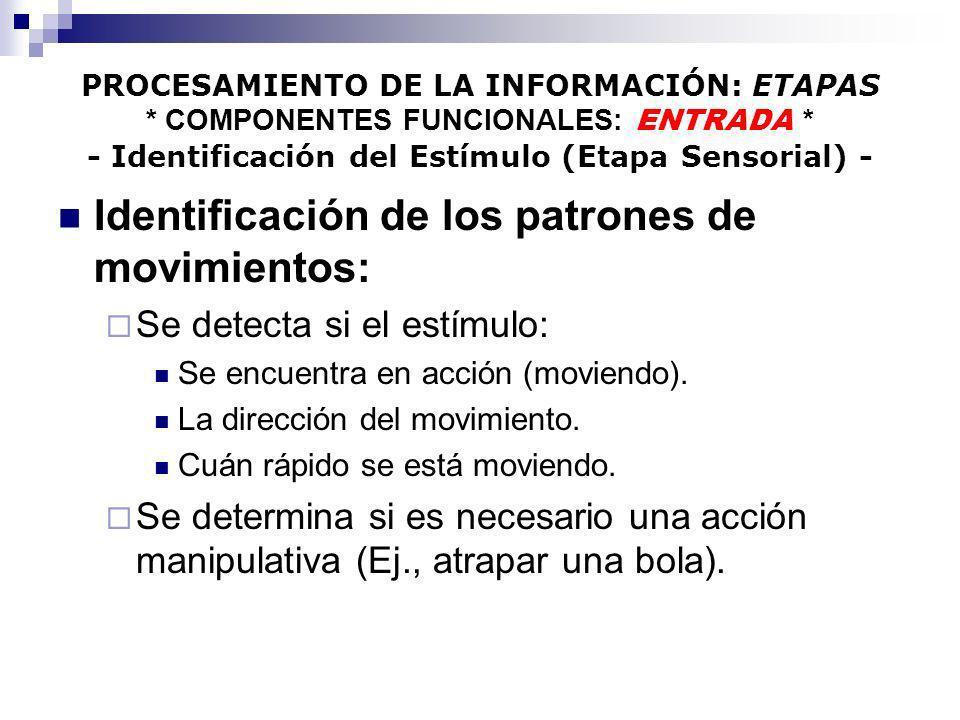 Identificación de los patrones de movimientos: