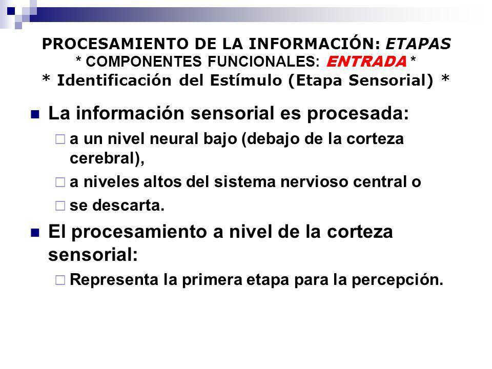 La información sensorial es procesada: