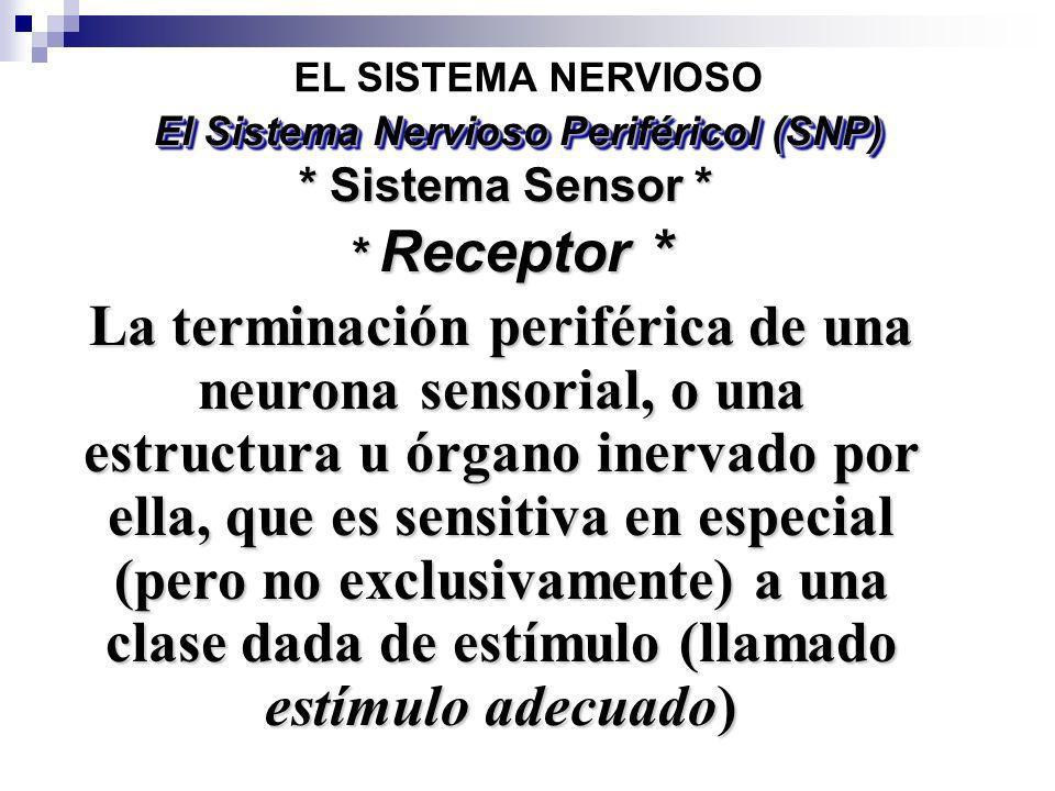El Sistema Nervioso Periféricol (SNP)