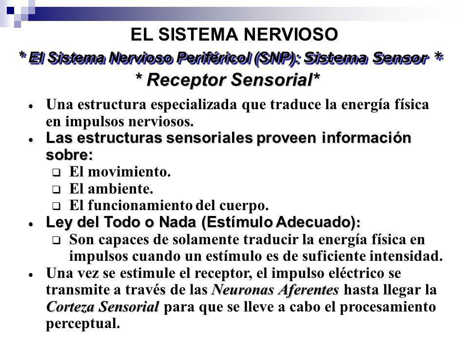 * El Sistema Nervioso Periféricol (SNP): Sistema Sensor *