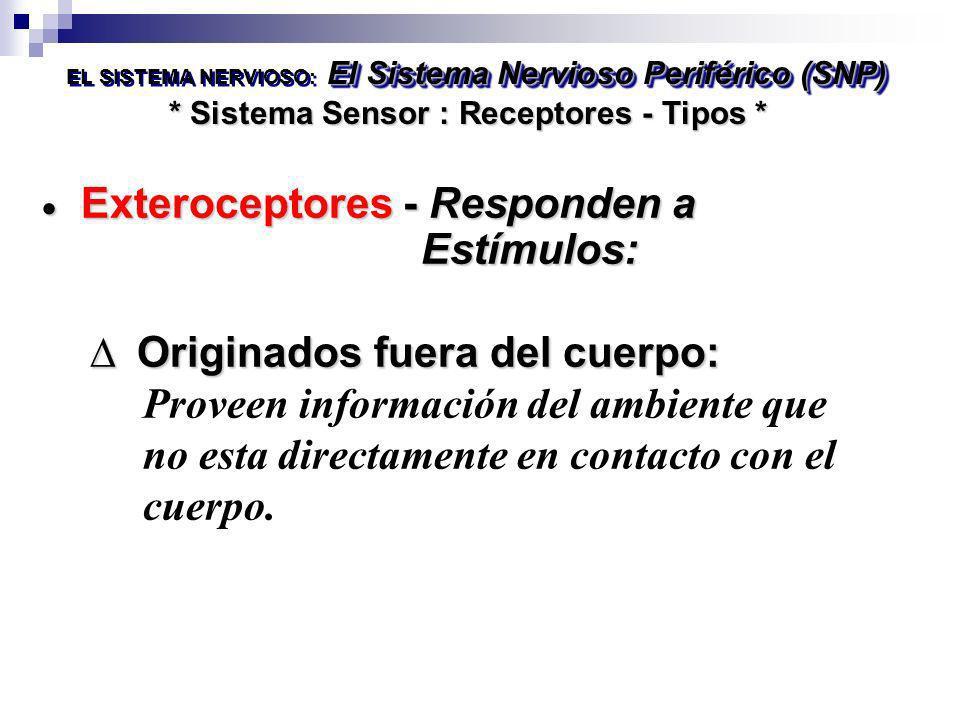 Exteroceptores - Responden a Estímulos: Originados fuera del cuerpo: