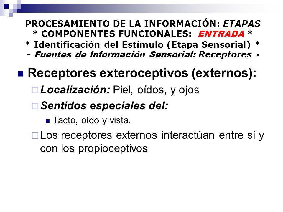 Receptores exteroceptivos (externos):