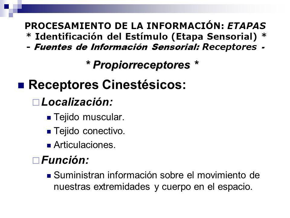 Receptores Cinestésicos: