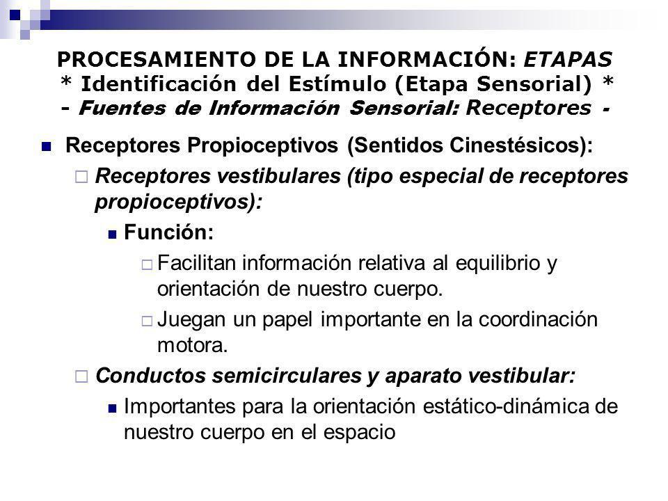 Receptores Propioceptivos (Sentidos Cinestésicos):