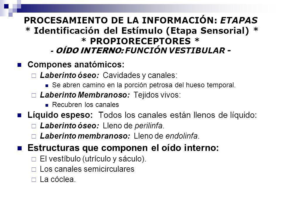 Estructuras que componen el oído interno:
