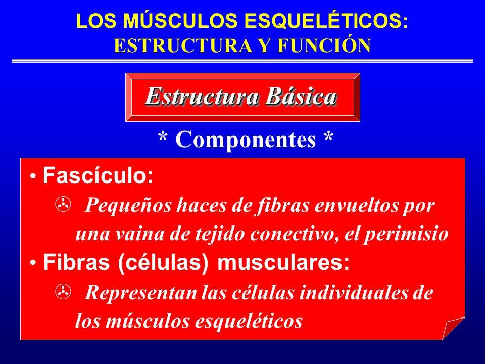 LOS MÚSCULOS ESQUELÉTICOS: ESTRUCTURA Y FUNCIÓN