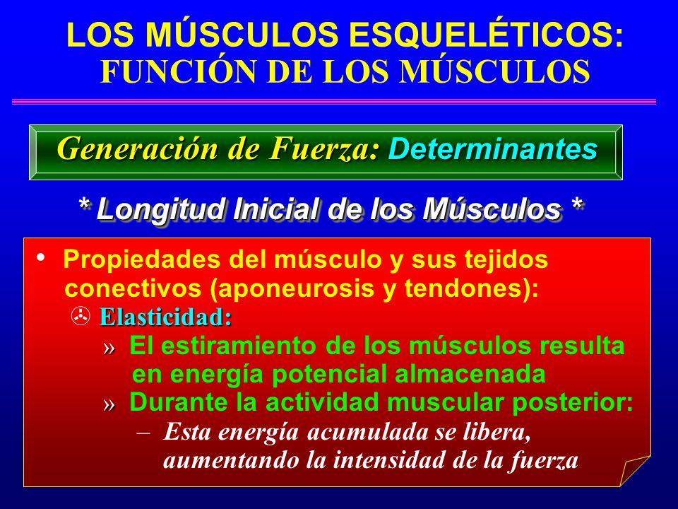 LOS MÚSCULOS ESQUELÉTICOS: FUNCIÓN DE LOS MÚSCULOS