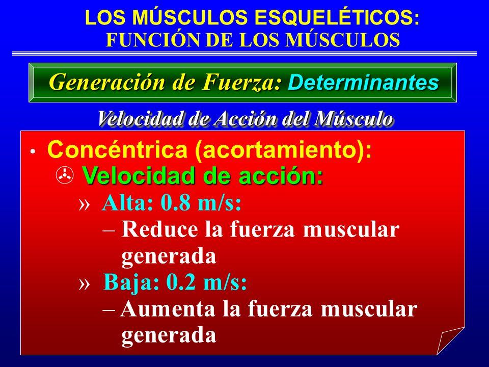Reduce la fuerza muscular generada Baja: 0.2 m/s: