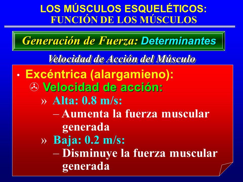 Aumenta la fuerza muscular generada Baja: 0.2 m/s: