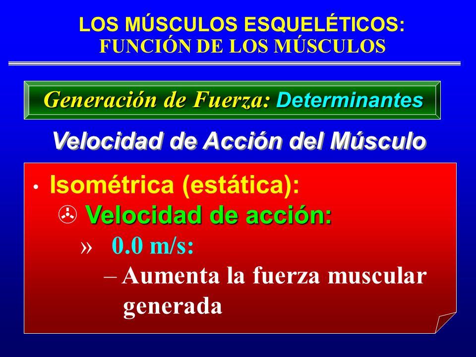 Aumenta la fuerza muscular generada