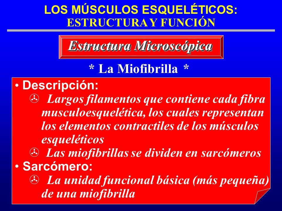 Estructura Microscópica