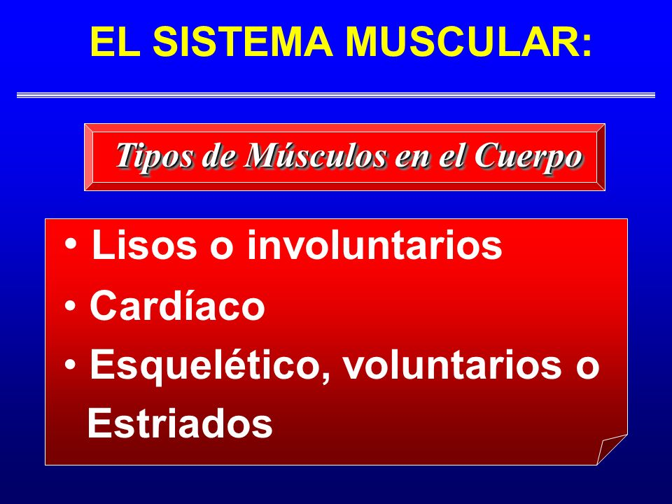 Lisos o involuntarios Cardíaco Esquelético, voluntarios o Estriados