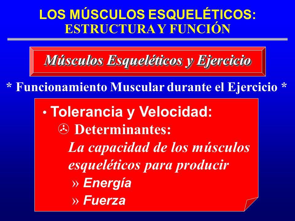 Músculos Esqueléticos y Ejercicio