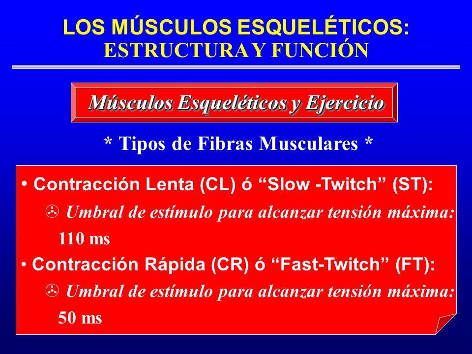 * Tipos de Fibras Musculares *
