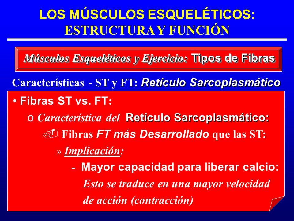 Características - ST y FT: Retículo Sarcoplasmático