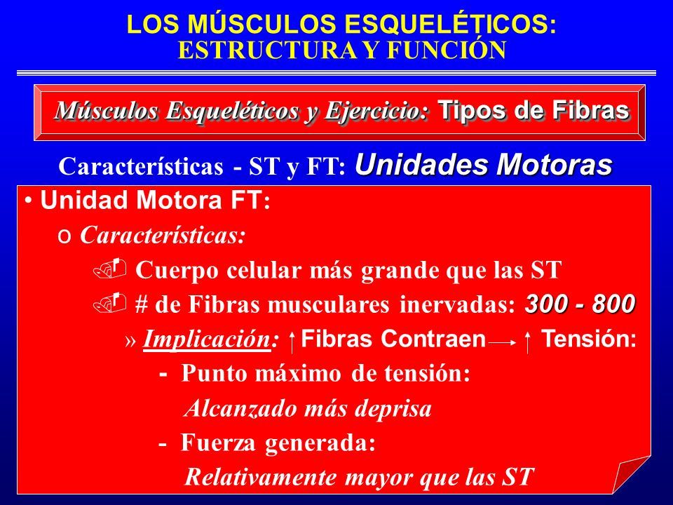 Características - ST y FT: Unidades Motoras