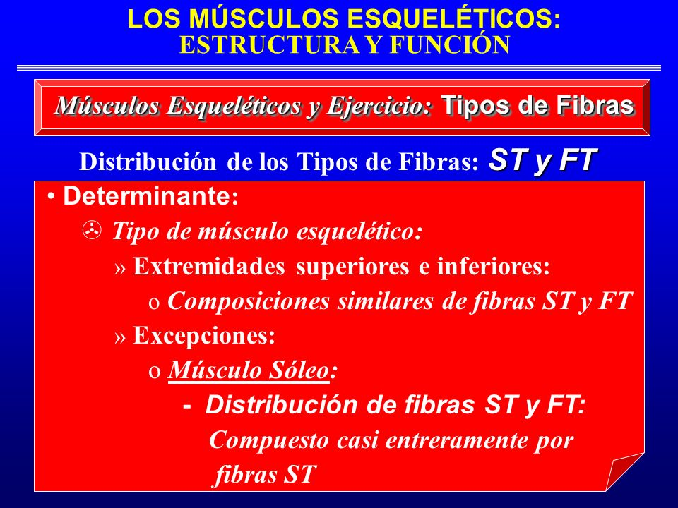Distribución de los Tipos de Fibras: ST y FT