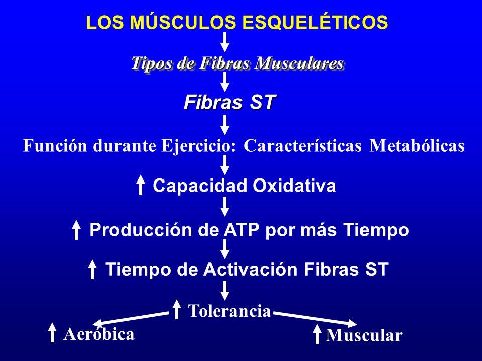 Función durante Ejercicio: Características Metabólicas