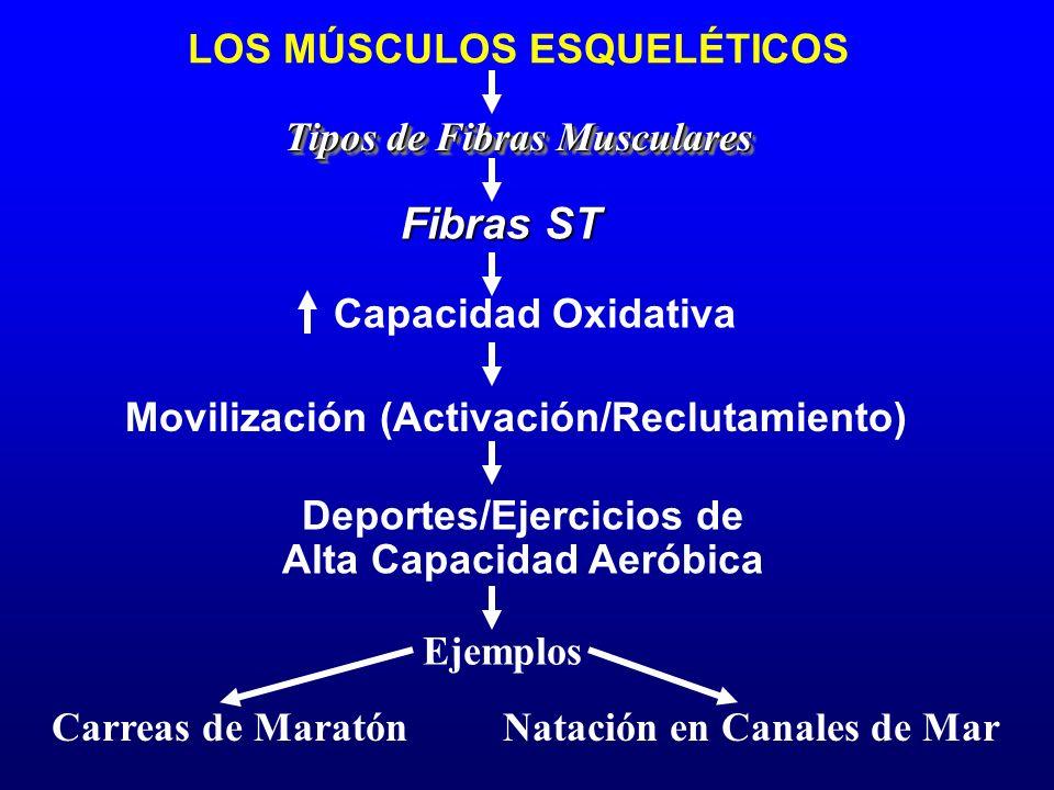 Ejemplos Carreas de Maratón